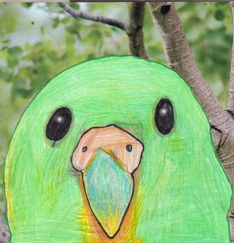 Close up with a Kākāpō