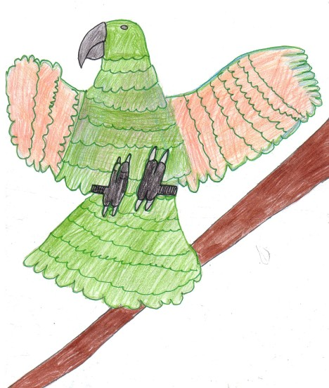 A Drawing of a Kea