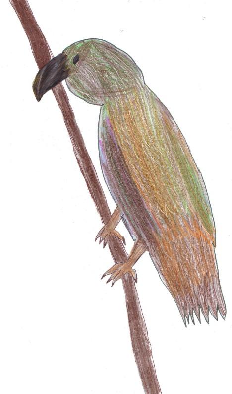 A Kea on a Branch