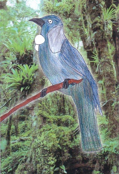 A Tui (Parson Bird)