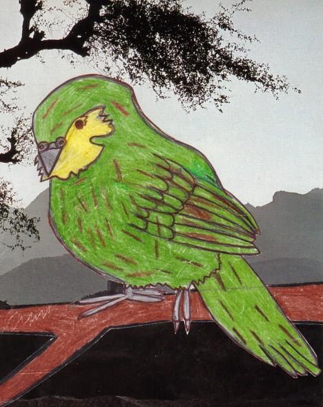 kakapo-matkea