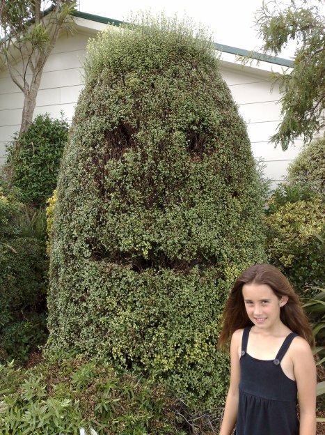 Smiling Bush