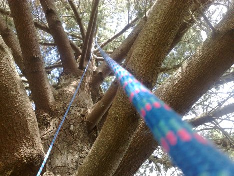 The Rope up the Tree